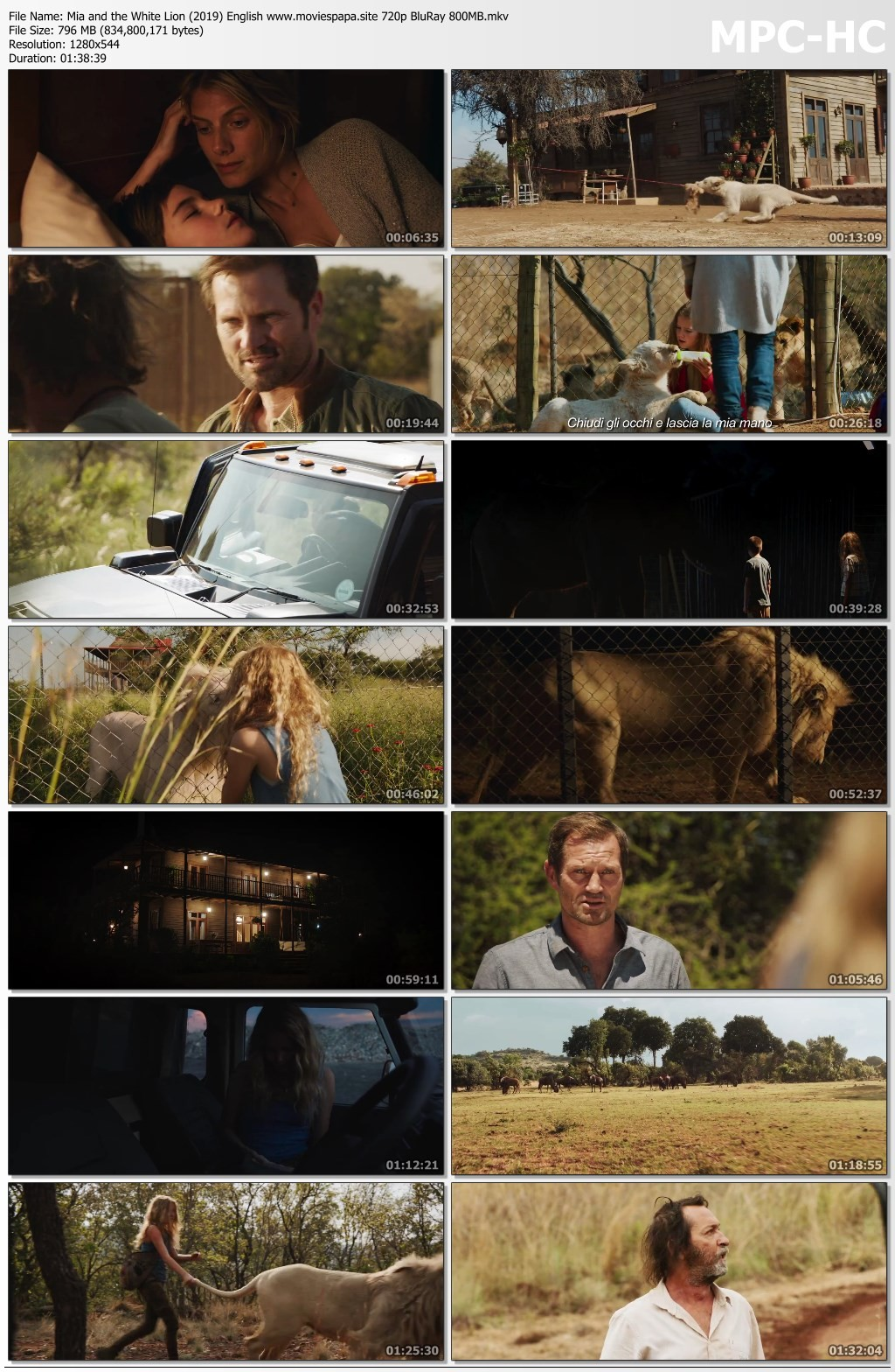 Lion hollywood movie download in hindi 720p | MSG The Warrior Lion